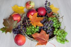 Ahornblätter, Nektarine, Trauben und andere Geschenke der Natur Stockbilder
