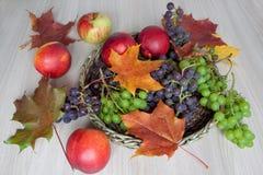Ahornblätter, Nektarine, Trauben und andere Geschenke der Natur Stockbild