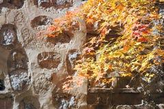 Ahornblätter und Steinwand Stockfoto