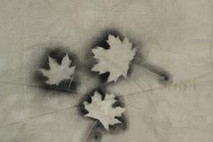 Ahornblatt auf dem Betonmauerhintergrund Lizenzfreies Stockfoto