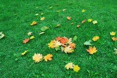 Ahornblatt auf grünem Gras Herbst Lizenzfreie Stockfotos