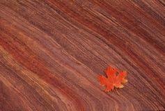 Ahornblatt auf Sandstein Stockfotografie