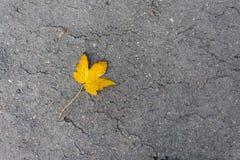 Ahornblatt auf Straße Stockfoto