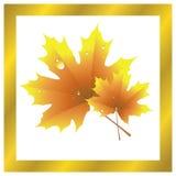 Ahornblatt, goldener Herbst Stockbild