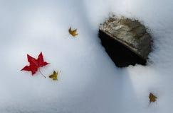 Ahornblatt im Schnee Stockfotografie