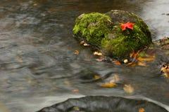 Ahornblatt im Wasserfall Lizenzfreies Stockbild