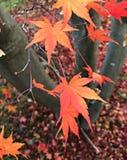 Ahornblatt und der Baum Lizenzfreie Stockbilder