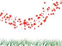 Ahornblatt und Gras im weißen Isolathintergrund Stockfotos