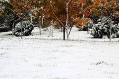 Ahornblatt und Schnee Stockfotografie