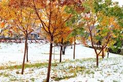 Ahornblatt und Schnee Stockfoto
