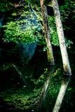 Ahornblatt und Wasser Stockbild