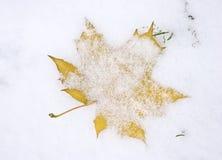 Ahornblatt unter erstem Schnee Lizenzfreie Stockfotos