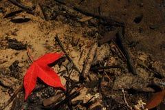 Ahornblatt Unterwasser Stockfoto