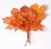Ahornblattblumenstrauß Stockfotografie