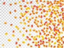 Ahornblattvektorillustration, Herbstlaub auf transparentem Hintergrund stockfotografie