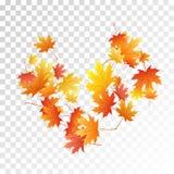 Ahornblattvektorillustration, Herbstlaub auf transparentem Hintergrund stockbilder