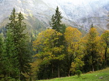 Ahornboden mountain valley vegetation at fall Royalty Free Stock Photos