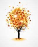 Ahornherbstbaum vektor abbildung