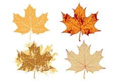 Ahornholz grunge Blätter Lizenzfreie Stockfotos