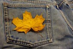 Ahornholz-Jeans Lizenzfreies Stockbild