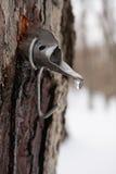 Ahornholz-Zuckerhahn im Baum Lizenzfreie Stockfotografie