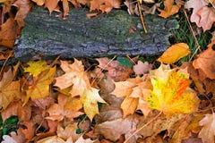 Ahornholzblätter auf Gras Stockfotos