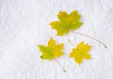 Ahornholzblätter im Schnee stockbilder