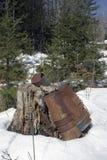Ahornholzjahreszeit im Frühjahr Lizenzfreies Stockfoto