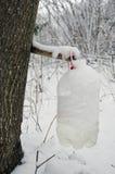 Ahornsaft in der schneebedeckten Plastikflasche Stockbilder