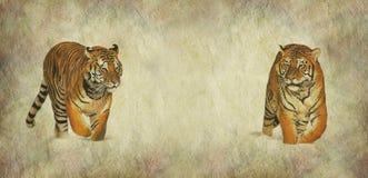 Ahorre nuestra bandera de la campaña de los tigres stock de ilustración