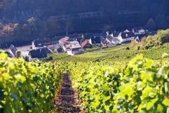 ahr doliny winnicy Fotografia Stock