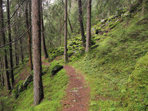 Ahrntal forest Royalty Free Stock Images