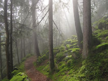 Ahrntal forest Stock Image