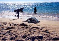Ahu de O ', Havaí - 4 de agosto de 2017: Tartaruga que descansa na praia famosa da tartaruga quando as crianças jogarem no mar fotografia de stock royalty free