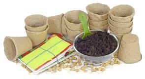 Ahueca sobres de la semilla de la turba Imagen de archivo libre de regalías