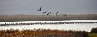 ahula ptaków formacja Israel Zdjęcie Stock