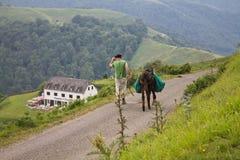 Ahusquy, Irati, Франция - 31-ое июля 2013 - баскский человек идя около работая нагрузки нося осла к деревне в зеленой долине Стоковое Изображение RF