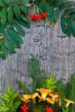 Ai van Chantarellepaddestoelen houten achtergrond Royalty-vrije Stock Afbeeldingen