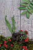 Ai van Ctaterelluscornucopioidis houten achtergrond Royalty-vrije Stock Fotografie