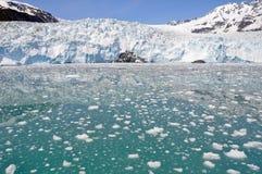 aialik海湾冰川kenai np 库存图片