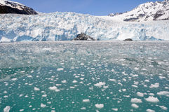 aialik fjords lodowa kenai np Obraz Stock