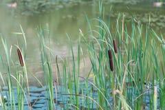 Aibachgrund猎物在Darmsheim,辛德尔芬根德国 图库摄影