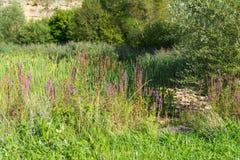 Aibachgrundsteengroeve in Darmsheim, Sindelfingen Duitsland Stock Foto's