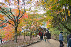AICHI, - NOV 23: Beautiful landscape in autumn at Korankei, on N Royalty Free Stock Image