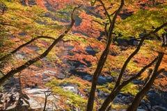 AICHI, - NOV 23 : Crowd of people on red bridge with colorful Au. Tumn leaf at Korankei, on Nov 23, 2016 in Aichi, Japan Royalty Free Stock Photos