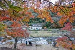 AICHI, - NOV 23: Piękny krajobraz w jesieni przy Korankei, na N Obraz Royalty Free