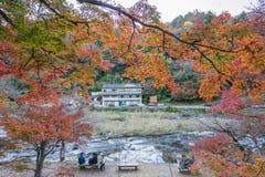 AICHI, - NOV 23: Piękny krajobraz w jesieni przy Korankei, na N Obraz Stock