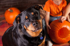 Aide de Halloween Photos libres de droits