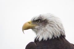 Aigle Photos stock