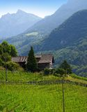Aigle in alpi agli svizzeri della Svizzera Fotografia Stock Libera da Diritti